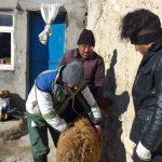 ۲۱ روستای اردبیل تحت پوشش خدمات دامپزشکی قرار گرفتند