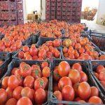 حذف دست دلالان از سفره کشاورزان مقصد کنونی گروهای جهادی/ راهاندازی پویش خرید مستقیم از مزرعه در راستای حمایت از کشاورزان