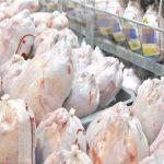 توزیع مرغ بین خانوادههای نیازمند شهرستان بوشهر توسط جهادگران